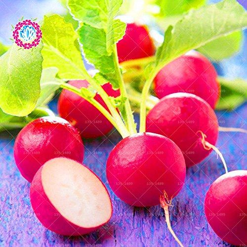11.11 Big Promotion! 100 pcs/lot graines de radis carotte semences de légumes verts en pot dans le jardin et la maison des graines de plantes d'herbes fraîches annuelles 2