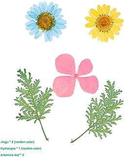 Kuyg manuel (français non garanti) - Fleur pressée - Décoration de fleurs - Collection cadeau - Fleurs séchées
