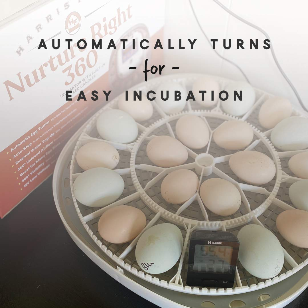 Harris Farms Nurture Right Incubator   Egg Incubator for Hatching Chicks   360 Degree View