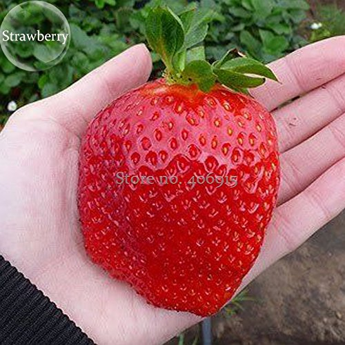 Pinkdose® 2018 Fragaria Ananassa - Frutas de fresa, 100 semillas, frutas orgánicas Heirloom E3562