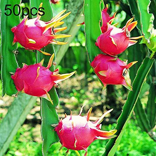 400Pcs Pitaya Seeds, Nutritive Delicious Fruit Bonsai Plant Home Garden Decor Pitaya Seeds