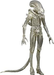 Best neca concept alien Reviews