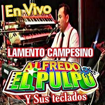 Alfredo El Pulpo Y Sus Teclados en Amazon Music Unlimited