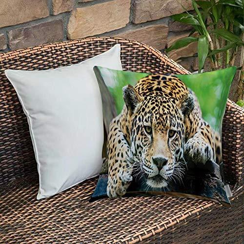 Funda de Cojín,Funda de Almohada Cuadrada para Asiento,Selva, Jaguar Sudamericano Animal Salvaje Carnívoro Imagen de Safari Fundas de Almohada para Sofá Decorativas Dormitorio Coche Pulgada 45 x 45 cm