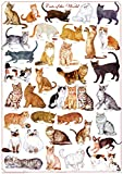 (24 x 36) Cats of the World - Felines Poster