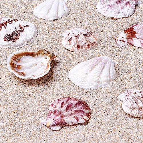 Kissitty 500 Grams Dyed Scallop Beach Sea Shell Beads with Holes 1.53-1.77' (39-45mm) Length for DIY Jewelry Making Art Craft Projects-Bag of Approx. 90pcs