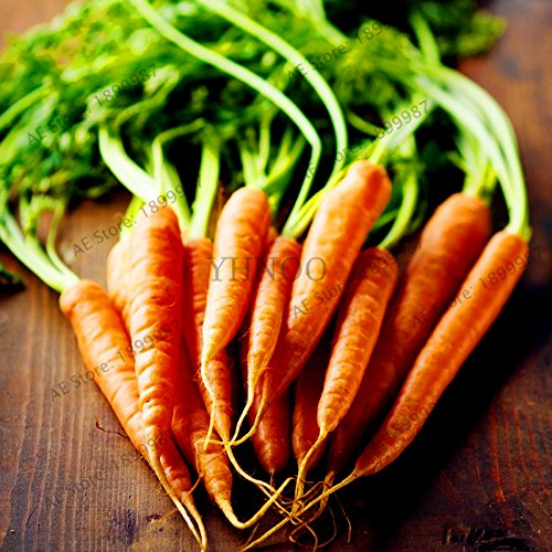 100pcs/sac de graines de carottes, fruits de légumes sains organiques graines, taux bourgeonnement élevé, plantes maison et jardin 4