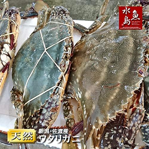 魚水島 新潟・佐渡産 天然 ワタリガニ 渡り蟹 大 5杯
