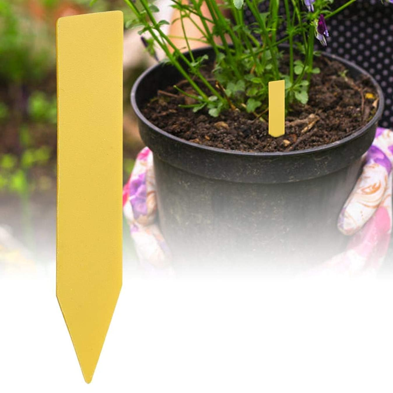 魂なぞらえる独裁者xuuyuu 園芸用ラベル 植物ラベル 植物タグ ガーデニングラベル 盆栽タグ フラワーラベル ガーデン作業 植物識別 ガーデニング 植物 温室園芸 庭?農地?果樹園に適用 繰り返し使える 花?苗など植物の管理 植物 防水(イエロー)