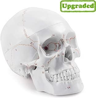 Best coyote skull anatomy Reviews