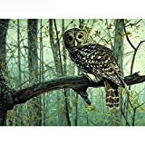 WKJDE Holiday Gift Owl On The Book 40X50Cmdiamond Painting Kits for Adults Fidget Spinner Kids Toys DIY 5D Christmas