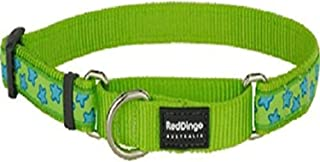 Red Dingo Martingale Lime Green with Turquoise Stars Collar, Small