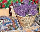 Springbok Basket of Lavender Jigsaw Puzzle, 1000-Piece by Springbok