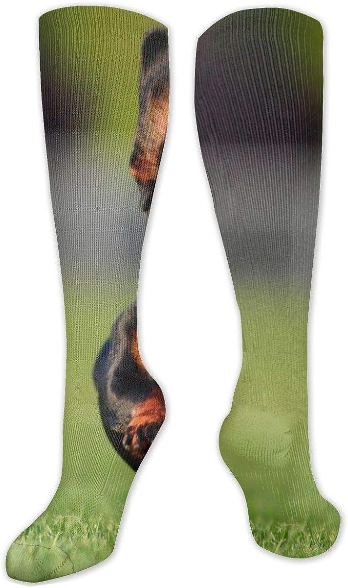 Flying Dog Knee High Socks Leg Warmer Dresses Long Boot Stockings For Womens Cosplay Daily Wear