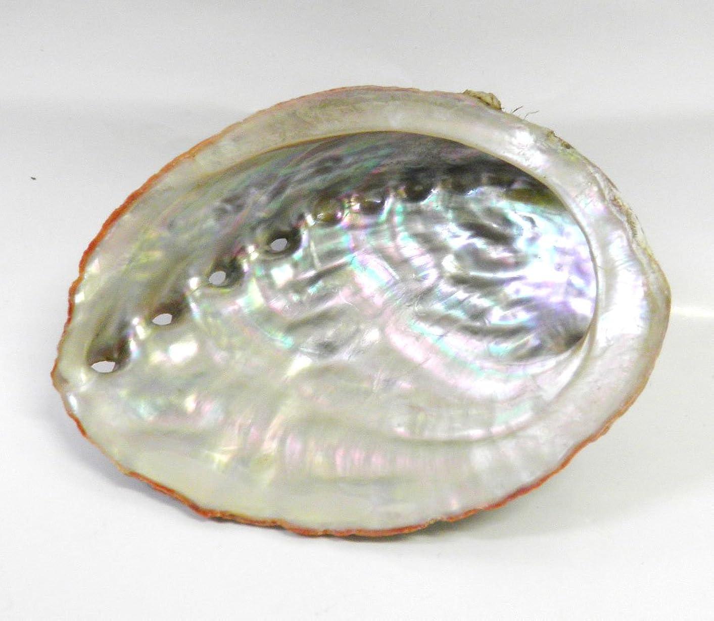 テナントに領事館アワビの貝殻 アバロン シェル ホワイトセージ 浄化用 お香 空間浄化 天然石