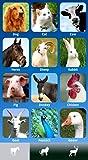 ZOOLA Animales