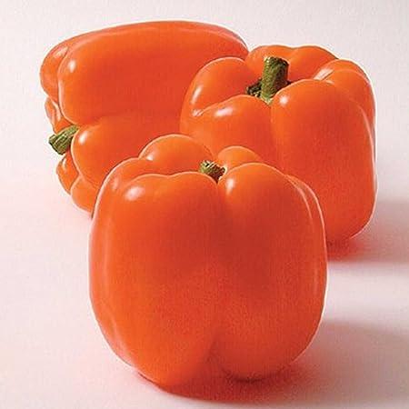 5 SEEDS-Sweet littleness! Mini Bell Yellow Pepper