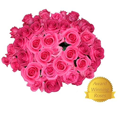 Flowers For Delivery On Amazon Bouquet Of 25 HOT PINK Fresh Roses Delivered With Free Flower