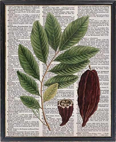 Cacao Plant Botanische Woordenboek Printable Antieke Illustratie Muur Art Print