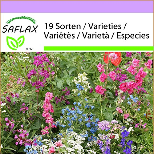 SAFLAX - Wildblumen: Schattengewächse - 1000 Samen - 19 Wildflower Mix