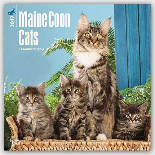 Maine Coon Cats - Hundekatzen 2017 - 18-Monatskalender: Original BrownTrout-Kalender [Mehrsprachig]