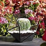 Asvert Cristal Transparente Pentagon Dodecaedro Geométrico Terrario Suculenta...