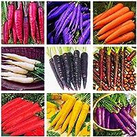 Soteer Seed House - Zanahorias orgánicas 'Rainbow Mix' F1 Zanahoria Mezclar Semillas Lechuga Vegetal Tubo Semillas de vegetales perennes resistentes para jardín balcón/terraza