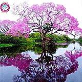 100/bag rari semi paulownia rosa (albero principessa o albero imperatrice) piante perenni ourdoor semi di fiori piante giardino di casa pot 1