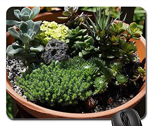Mousepad Sukkulenter Garten Sukkulente Gartenpflanze Tontopf Tastatur Diy Mausmatte Mauspads Spielmatte Retro Tisch Standardgröße Schreibtisch Laptop 25X30Cm Gummi Bürocomputer Pe
