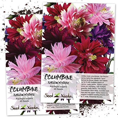 Seed Needs, Columbine Barlow Mixture (Aquilegia vulgaris) Twin Pack of 40 Seeds...