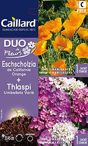 Caillard PFCA29015 Graines de Eschscholzia Californie + Thlaspi Umbella