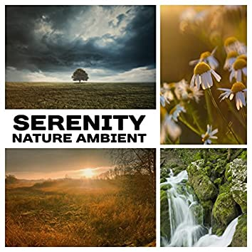 Serenity  Nature Ambient: 50 Relaxation Sounds for Meditation & Sleep, Instrumental New Age for Yoga & Spa