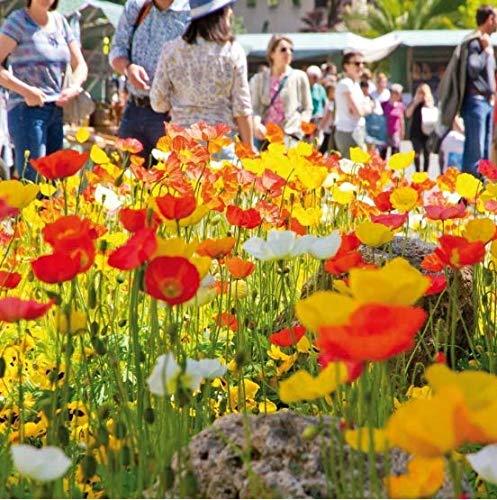 Qulista Samenhaus - 100pcs Kalifornischer Mohn Multicolor Mischung | Blumensamen Mischung mehrjährig Winterhart, Ideal für sonnige Beete, bunte Rabatten, als Einfassung, vor Hauswänden