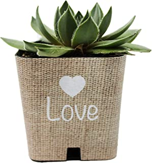 Best succulent for wedding souvenirs Reviews