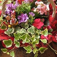 誕生日プレゼント ディズニー フラワーギフト 鉢花 ミッキー ミニー プロにおまかせ♪ 季節の鉢植え バースデーA ミッキー ミニー 誕生日プレゼント・記念日の贈り物におすすめのフラワーギフト