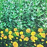 Gardening tools - plant cover Housse de Protection pour Plantes en...