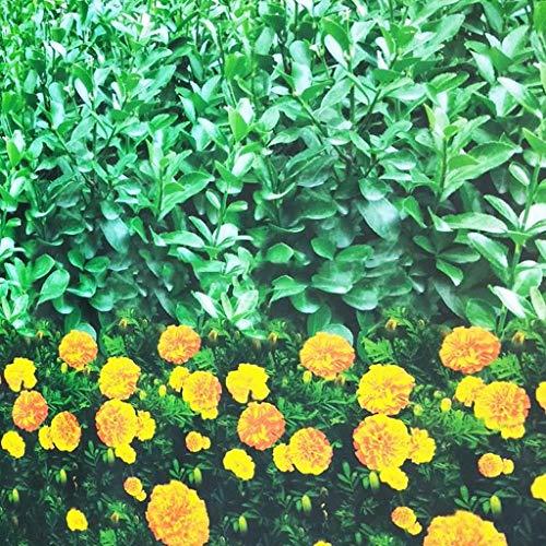 Gardening tools - plant cover Housse de Protection pour Plantes en Tissu Non tissé imprimé, à Froid et antigel (Couleur : A)