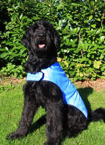 Prestige Pet Products - Manteau rafraîchissant pour chien - Bleu -Taille L