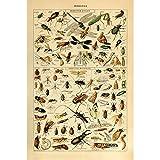 Meishe Art Jahrgang Plakate Drucken Plakatdruck Insekten