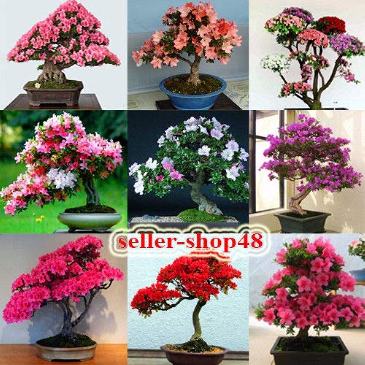 牽引オーナー目立つ5:5個/パック。つつじ種子の盆栽が桜のように見える10種類の種子