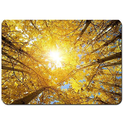 Blived Antideslizante Alfombra De Baño,Vista hacia Arriba de la caída de árboles de Aspen,Distrito de Leh en el Estado de Jammu y,Alfombra de Cocina Alfombra Mascota,Alfombras de Ducha 75x45cm
