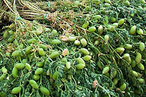 Portal Cool Mutter Erbsensamen Gemüse Kichererbsen Erbstück Gemüsesamen. 100 Samen