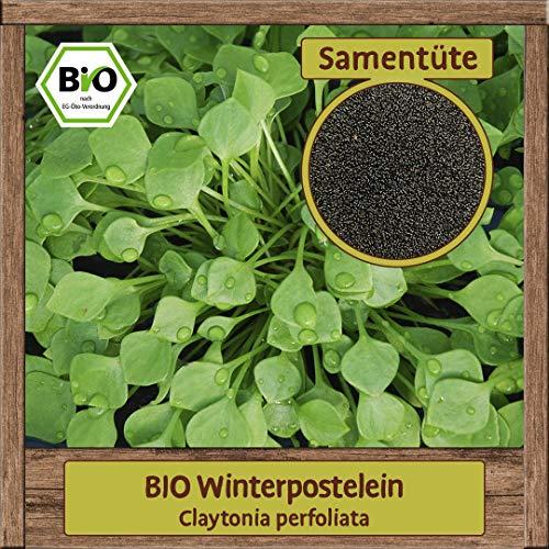 BIO Portulak Samen Sorte Winterpostelein (Claytonia perfoliata) Gemüsesamen Portulak Saatgut