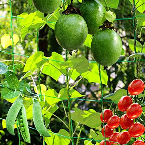 BED COTTON Garden Pea & Bean Netting, Climbing Plant Trellis Net with 10 * 10cm Mesh Size for Growth of Cucumber Tomatoes and Vines Support, (1.8m x 5m)