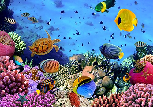 wandmotiv24 Fototapete Korallenriff mit Fischen S 200 x 140cm - 4 Teile Fototapeten, Wandbild, Motivtapeten, Vlies-Tapeten Unterwasser-Welt, Meer M0480