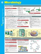 Microbiology SparkCharts