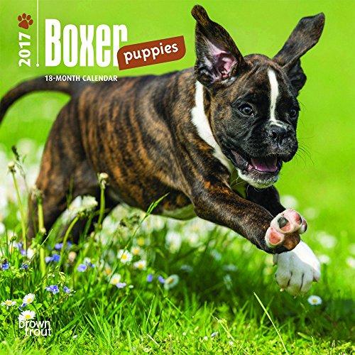 Boxer Puppies - 2017 Mini Calendar 7 x 7in