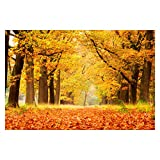 Cartel de paisaje del Parque Nacional De Hoge Veluwe de los Países Bajos, pintura de lienzo de otoño, cuadros artísticos de pared, impresiones de decoración del hogar, 60x80cm sin marco