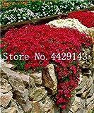 Generic Fresh 100 pcs semillas de flores ROCK CRESS para plantar rojo blanco