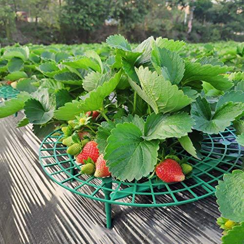 DAKERTA 5pc Erdbeer & Frucht Reifer/Erdbeerstütze/Schneckenschutz/Gitterablage/Fruchthalter/Fruchtstütze